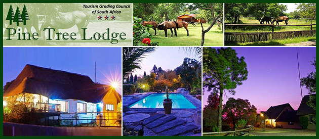 PINE TREE LODGE & EQUESTRIAN